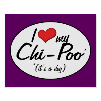 It's a Dog! I Love My Chi-Poo Poster