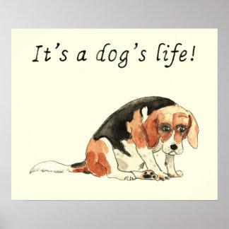 It's a dog's life Funny Cute Beagle Dog Art Slogan Poster