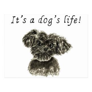 It's a dog's life,miniature Schnauzer pup postcard