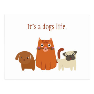 Its a dogs life, or a cats, Pet Lover Postcard