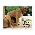 "It's A ""Mastiff"" thing! (English Mastiff) postcard"
