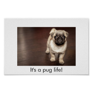 It's a pug life poster