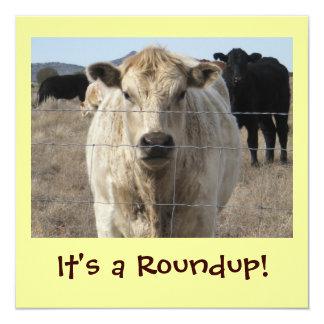 It's a Roundup! Cattle Drive Celebration 13 Cm X 13 Cm Square Invitation Card