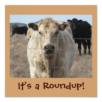 It's a Roundup! Cows - Cattle Drive Celebration Card
