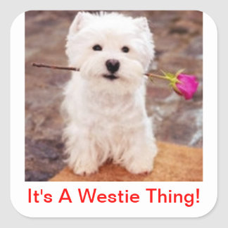 It's A Westie Thing! Square Sticker
