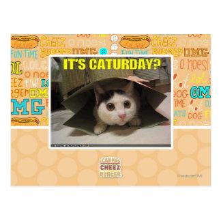 It's Caturday? Postcard