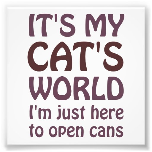 Its My Cats World - I Just Open Cans Photograph