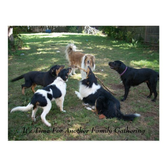 It's Time For Another Family Gathering Postcard