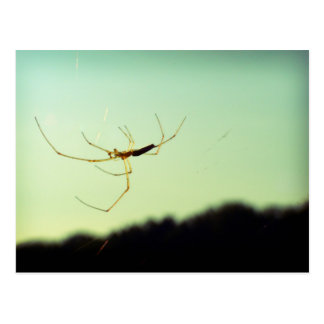 Itsy bitsy spider postcard
