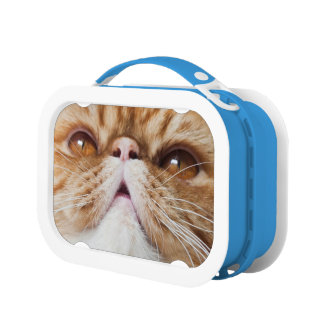 ItZ LuNcH TiME!! Lunch Box