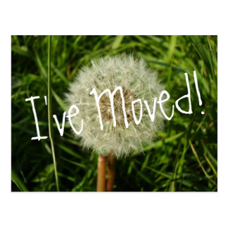 I've moved postcard with Dandelion photograph