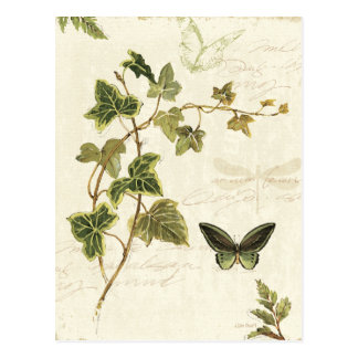 Ivies and Butterflies Postcard