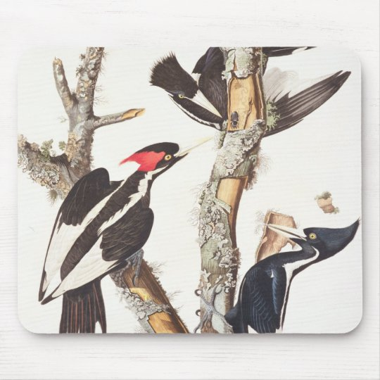 Ivory-billed Woodpecker, 1829, (print) Mouse Mat