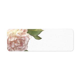 Ivory peach roses