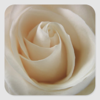 Ivory White Rose Flower Square Sticker