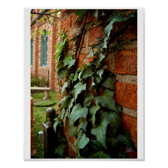 Ivy & Brick [Print] Poster