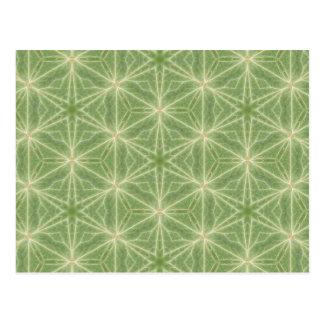 Ivy Caleidoscopic Geometric Design Postcard