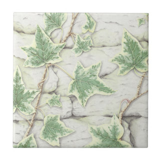 Ivy on a Dry Stone Wall in Pencil Ceramic Tile