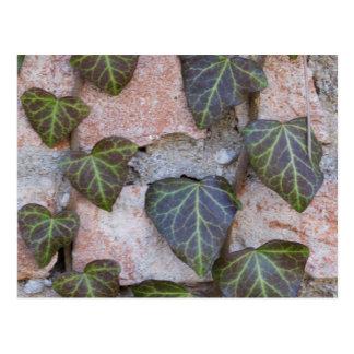 ivy on the tree postcard