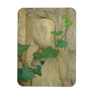 Ivy on the Wall Rectangular Photo Magnet