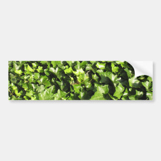 Ivy Plants Bumper Stickers