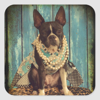 Ivy the Boston Terrier Square Sticker