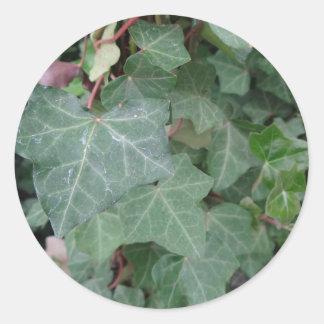 Ivy Tree Round Sticker