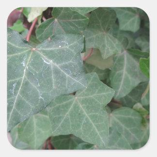 Ivy Tree Square Sticker