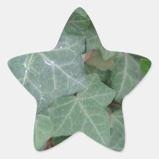 Ivy Tree Star Sticker