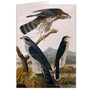 J.J. Audubon (Goshawk, Stanley Hawk) (1829) Card