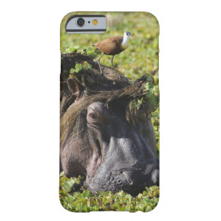 Jacana standing on hippo's (Hippopotamus Barely There iPhone 6 Case