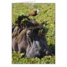 Jacana standing on hippo's (Hippopotamus Card