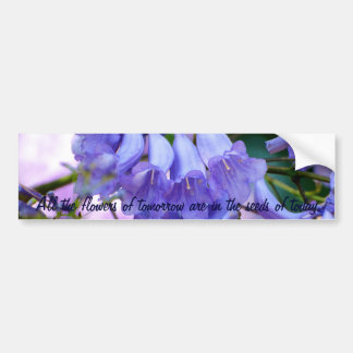 Jacaranda Blossoms Bumper Sticker