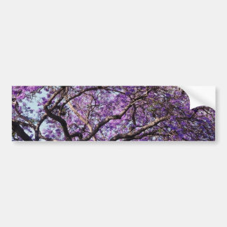 Jacaranda tree in spring bloom flowers bumper sticker