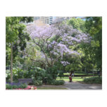 Jacaranda Tree Post Card