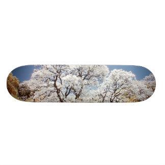 Jacaranda Trees Skate Board Deck