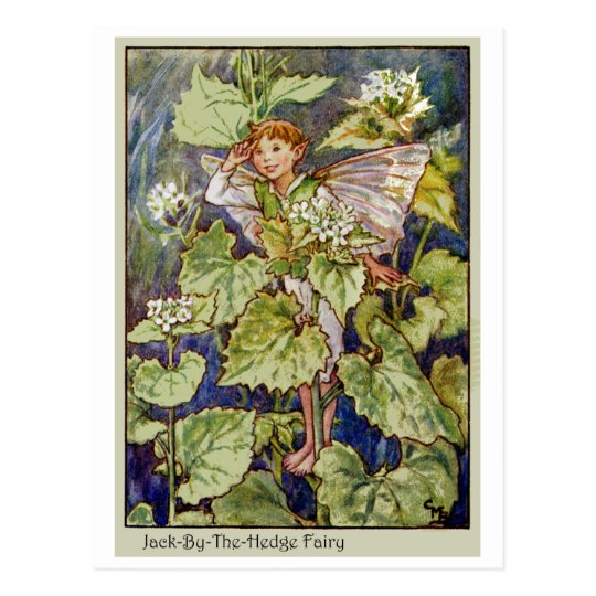 Jack-By-The-Hedge Fairy Postcard