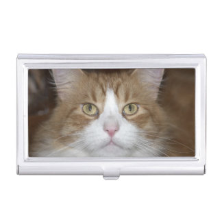 Jack domestic orange and white maine coon cat business card holder