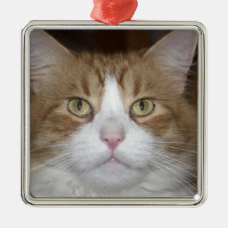 Jack domestic orange and white maine coon cat christmas ornament