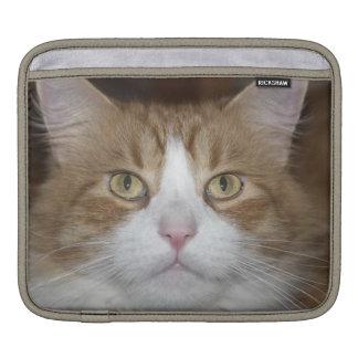 Jack domestic orange and white maine coon cat iPad sleeve