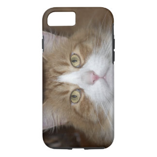 Jack domestic orange and white maine coon cat iPhone 8/7 case