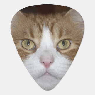 Jack domestic orange and white maine coon cat plectrum