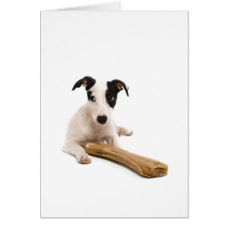 jack russel and his bones greeting cards