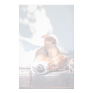 Jack Russel On Autumn Porch Stationery Paper