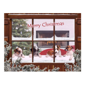 Jack Russell Christmas Wishes Greeting Postcard