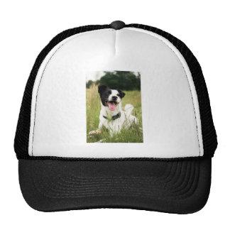 Jack Russell Trucker Hats