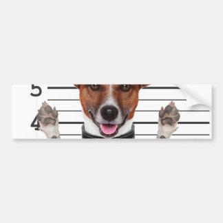 Jack russell prisoner bumper sticker