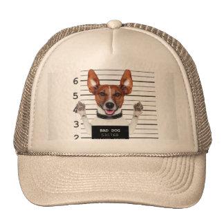 Jack russell prisoner cap