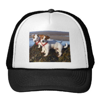 Jack Russell Puppies Hats