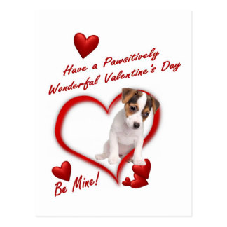 Jack Russell Puppy Love In An Envelope Postcard